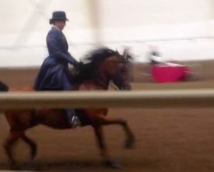 Gala MF (Erykk MF x Ginuine/Medalion) First class ever under saddle, Jr. English Pleasure WIN!